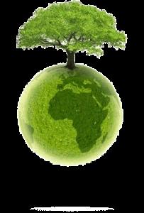 visuel-arbre-materiau-propre